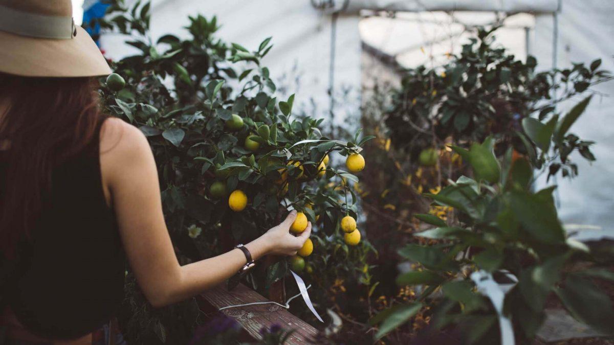 Θάμνοι και δέντρα: Επιλέξτε, αγοράστε και φυτέψτε τώρα!