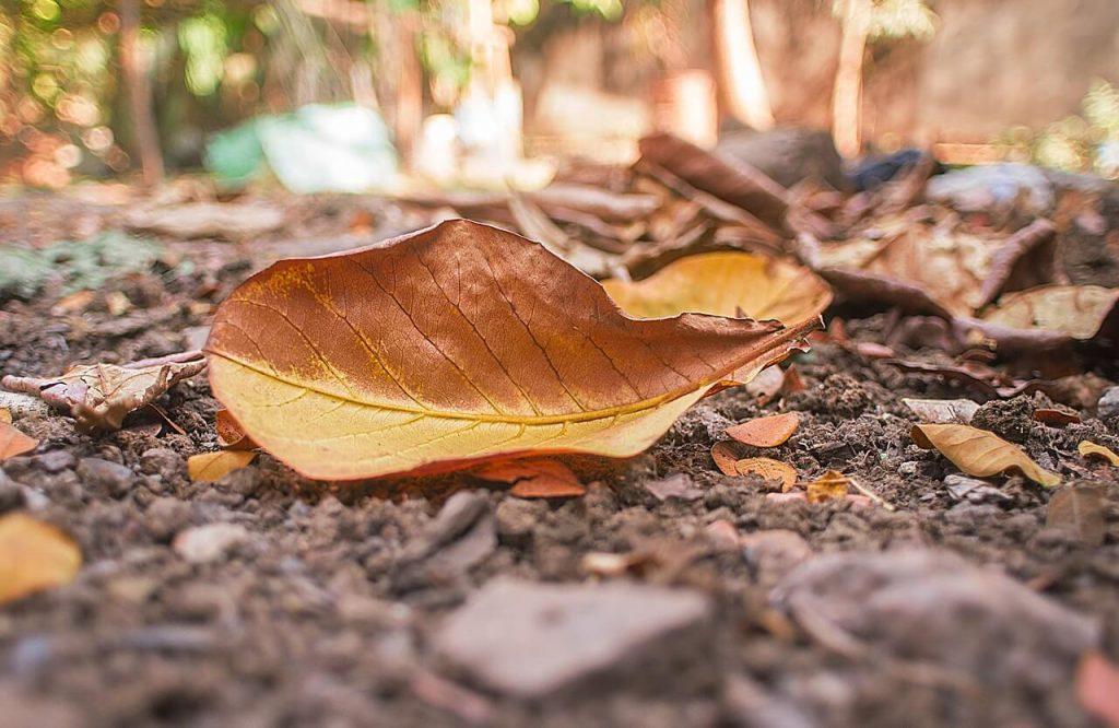 Τα πεσμένα φύλλα μπορούν να  προφυλάξουν βολβούς και ρίζες..