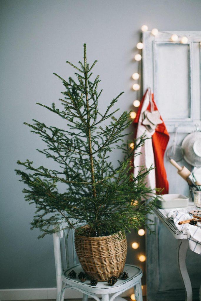 Ένα μικρό έλατο σε γλάστρα δημιουργεί την απαραίτητη γιορτινή ατμόσφαιρα.