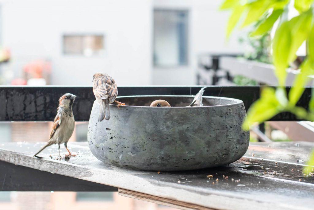 Χρησιμοποιήστε ένα βαρύ ανοιχτό δοχείο ως ταΐστρα. Σε ένα τέτοιο παρόμοιο δοχείο, αν θέλετε να βάλετε νερό για να έχει τον ρόλο ποτίστρας, τους κρύους μήνες τοποθετήστε στο εσωτερικό του βότσαλα, επειδή τα πουλιά μπορεί να θελήσουν να κάνουν μπάνιο και τον χειμώνα δεν πρέπει να βραχούν.