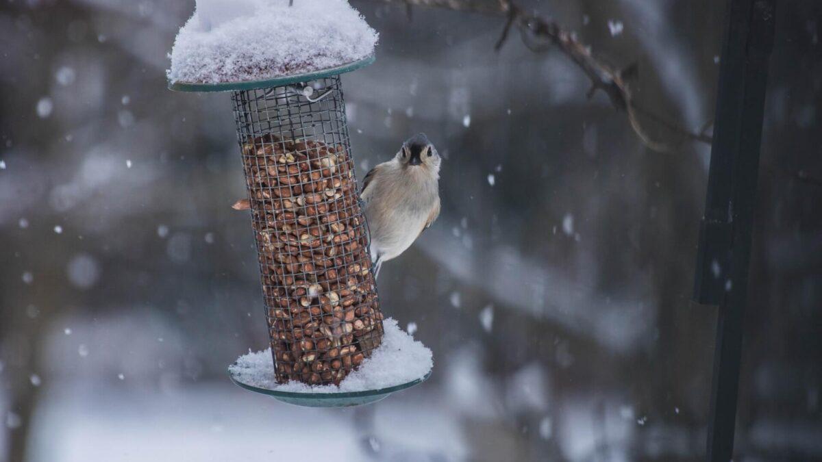 Στον κήπο και τη βεράντα, βοηθήστε τα πουλιά να επιβιώσουν
