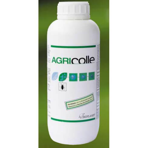Bio insecta Agricollegeosimio.gr kamelia 1