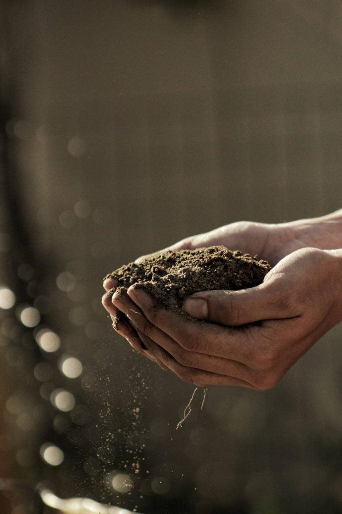 Το χώμα που θα τοποθετήσετε στη λακκούβα, πρέπει να είναι όσο το δυνατόν φρέσκο και λεπτόκοκκο.