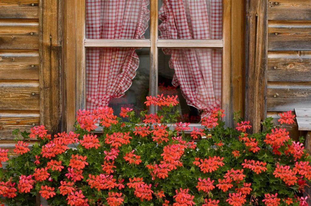 Ένα ανθοστόλιστο παράθυρο στη Γερμανία με κόκκινες βαμβακούλες.
