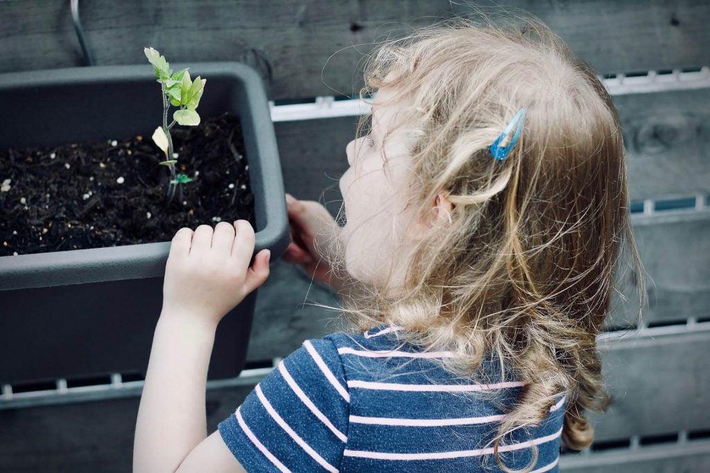 Η ανάπτυξη των μικρών φυτών είναι εντυπωσιακή και στα παιδικά μάτια μοιάζει ένα μικρό θαύμα, αρκεί να τη βλέπουν και να την αντιλαμβάνονται μέρα τη μέρα.