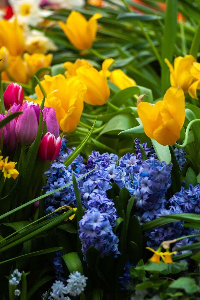 Χρώματα και αρώματα από τους βολβούς της άνοιξης!