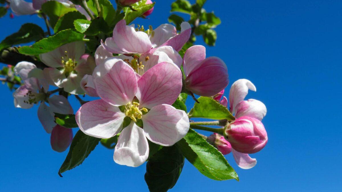 Οι εργασίες στα φυτά σας τον Απρίλιο