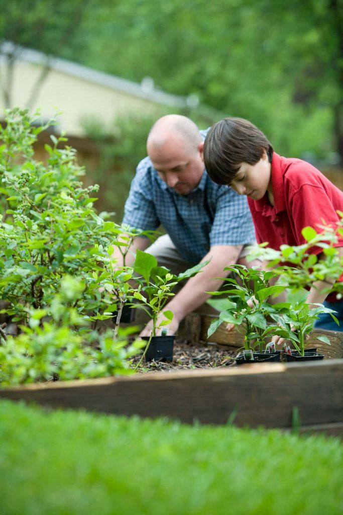 Δημιουργήστε ένα λαχανόκηπο με τα καλοκαιρινά κηπευτικά.