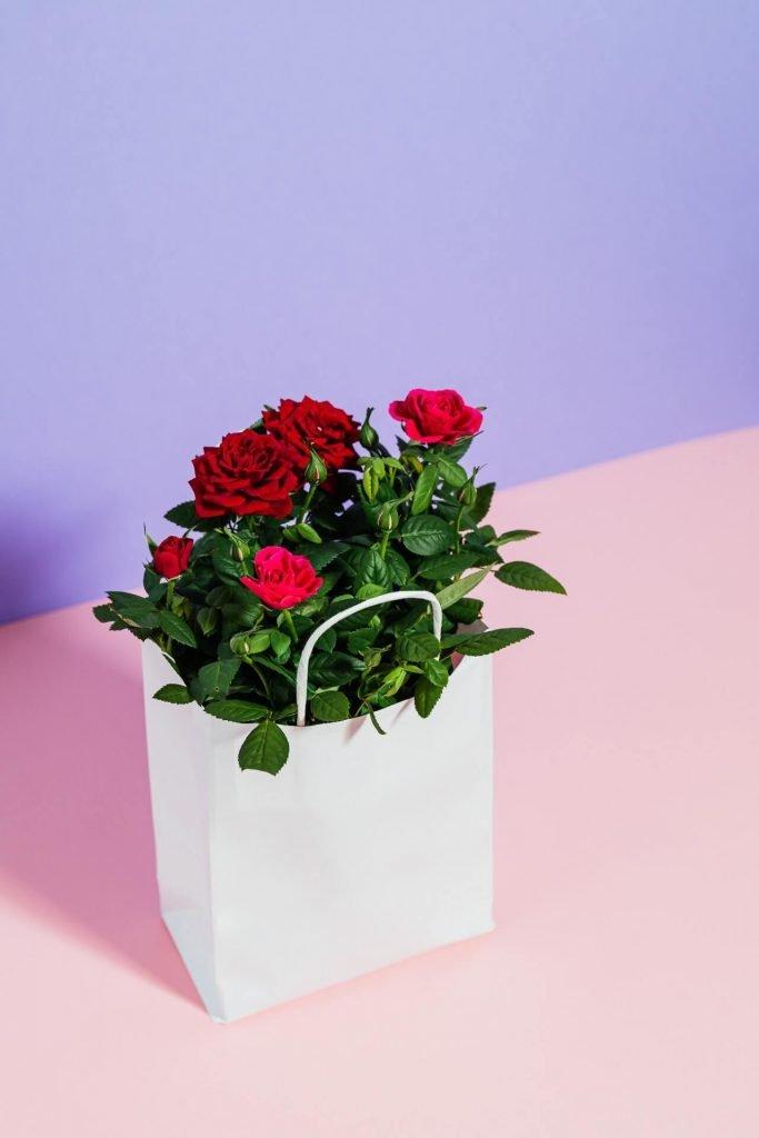 Μια μίνι τριανταφυλλιά με κάπως μεγάλα άνθη, γίνεται το ιδανικότερο δώρο για το σπίτι σας.