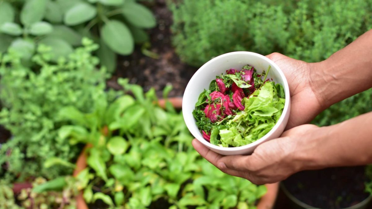 Μυρωδικά με κηπευτικά: για οικολογική φυτοπροστασία, φυσικά!