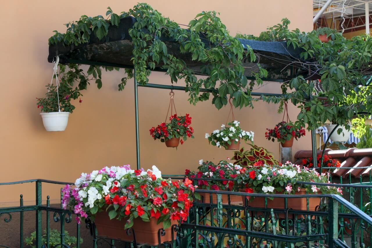Ένα μικρό μπαλκόνι, με τα λουλούδια του έρωτα, μεταμορφώνεται σε ανθισμένη όαση.