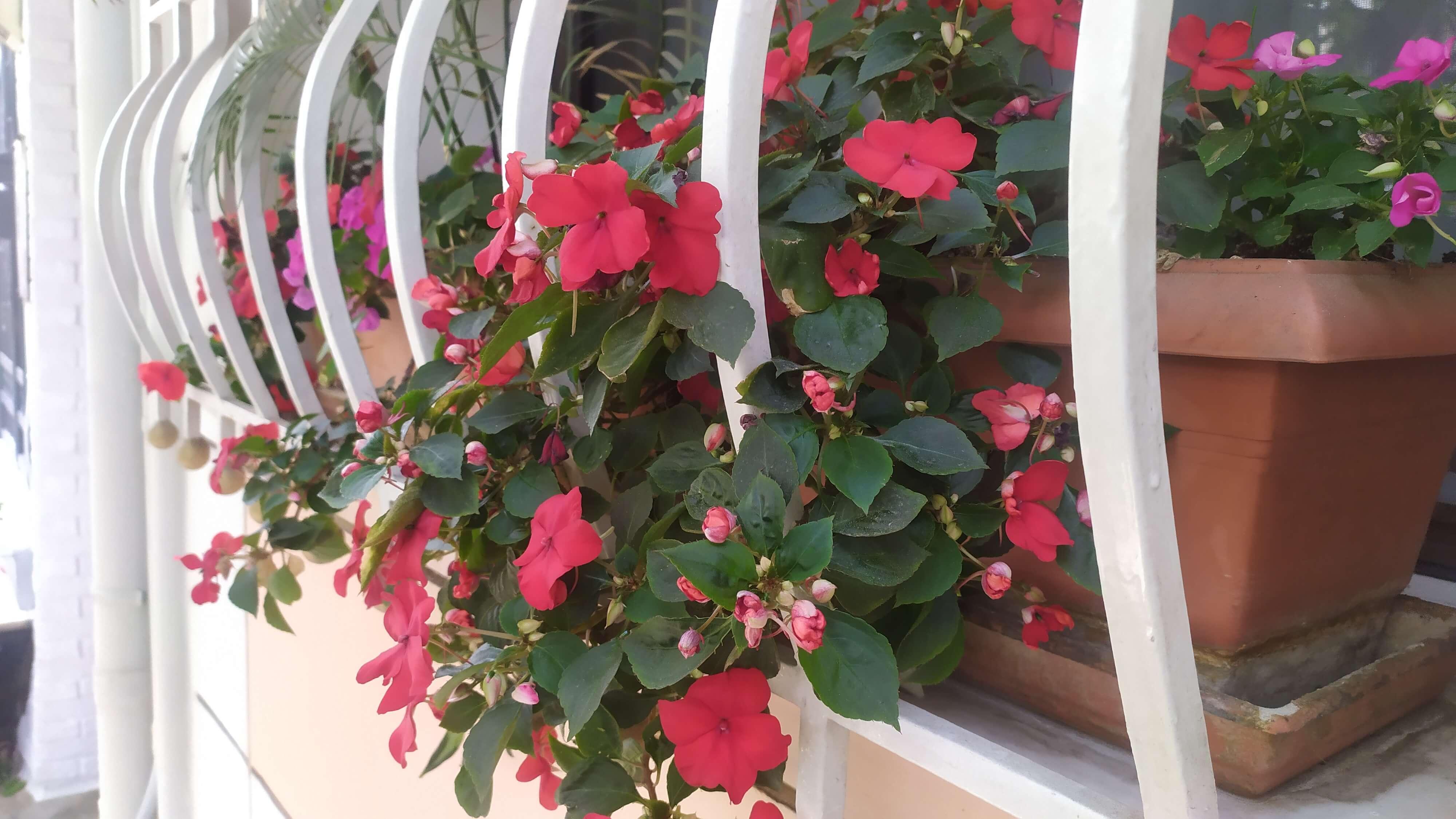Ιδανικά φυτά για κρεμαστές διακοσμήσεις.