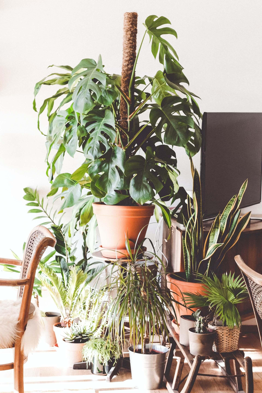 Αν συντηρείτε φυτά μέσα στο σπίτι, καλό είναι να τα συγκεντρώσετε σε ομάδα, ώστε να επωφεληθούν της δροσιά που αναδύει το κάθε ένα ξεχωριστά και όλα μαζί.
