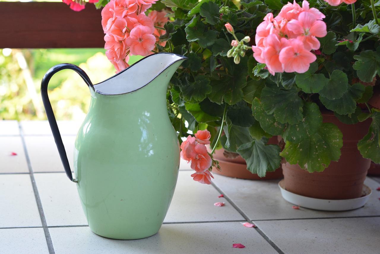 Τον Ιούλιο, όταν ανεβαίνει πολύ η θερμοκρασία, μεταφέρετε -όσο αυτό είναι εφικτό- σε πιο δροσερές θέσεις, τα φυτά σε γλάστρα.