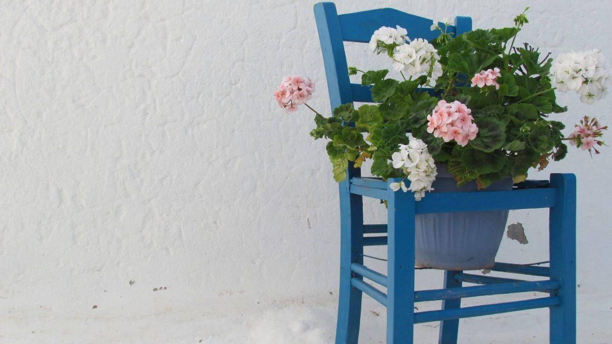 Φυτά από μοσχεύματα: ζωντανές αναμνήσεις από τις διακοπές σας.