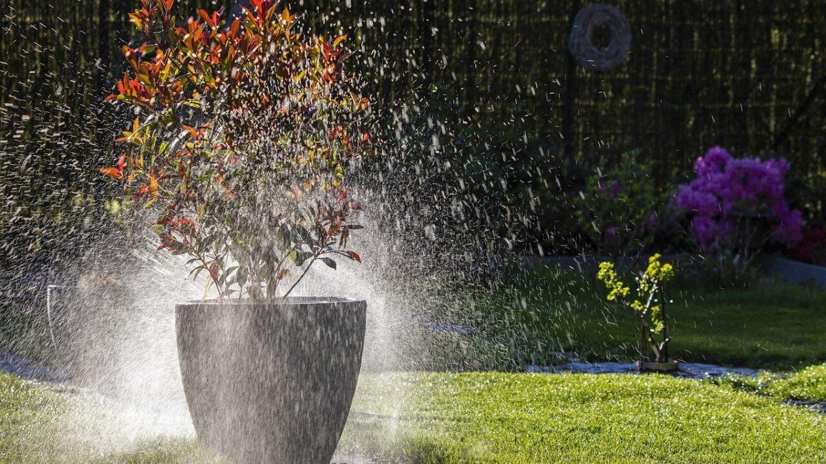 12 βήματα και 1 μυστικό για να ξανανιώσουν τα φυτά σας τον Σεπτέμβριο